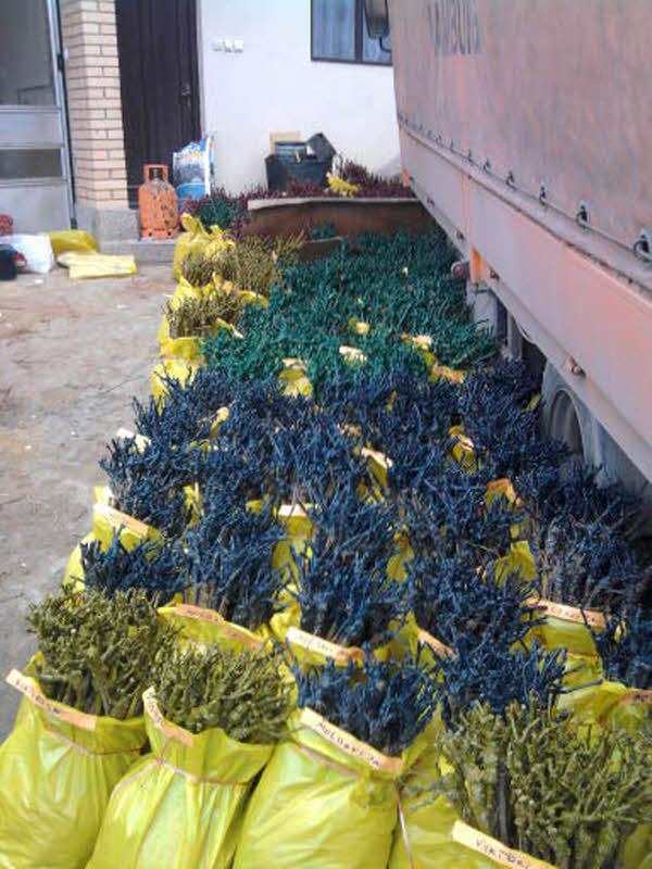 004_lozni kalemovi spremni za prodaju