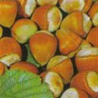 lesnik ludolf vocne sadnice Informacije za lešnik sadnice