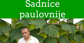 Sadnice paulovnije Vranac Lozne Sadnice Kalemovi